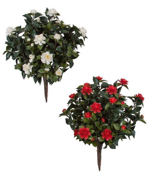 """28"""" Outdoor Flowering Gardenia Bushes - White or Red"""
