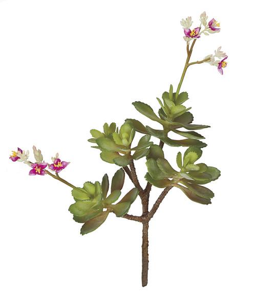 """A-17559016"""" Flowering Sedum Plant"""