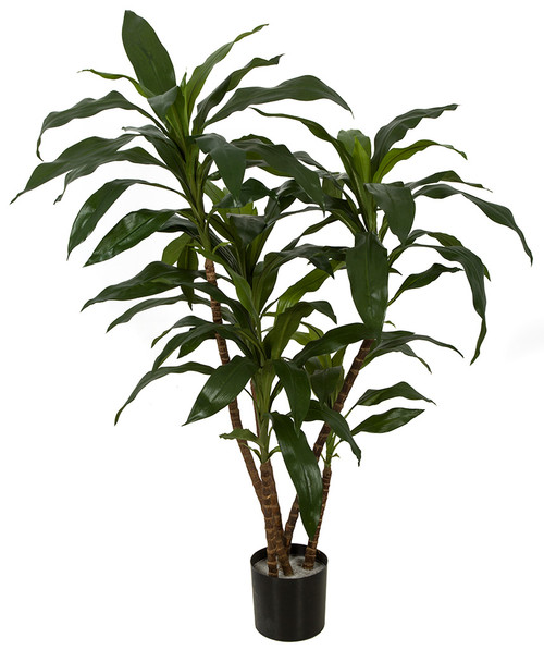 W-170010 3' Dracaena Plant in Weighted Base