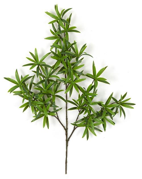 "AR-17600025"" Podocarpus SprayFire Retardant"