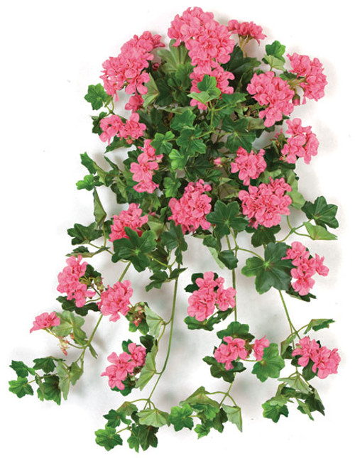 PR-120980 - Beauty Color
