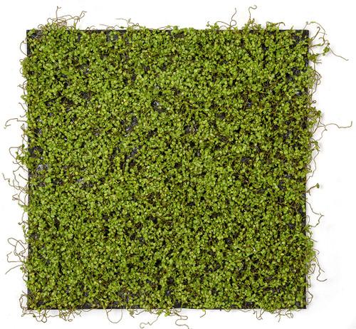 """19.5"""" x 19.5"""" Square Mini Leaf Mat"""