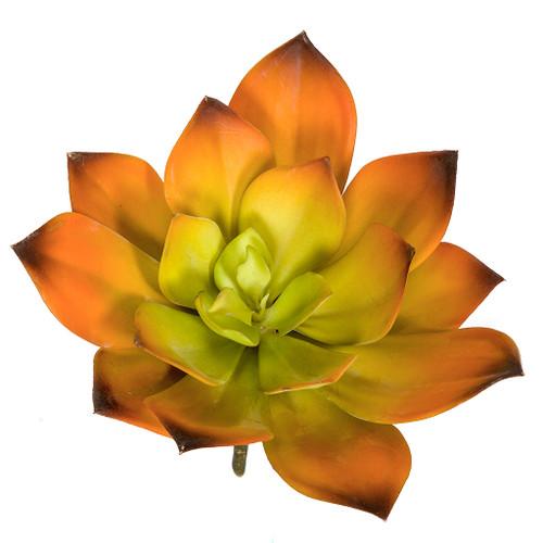 """A-184370 8"""" Width Orange/Green Echeveria"""