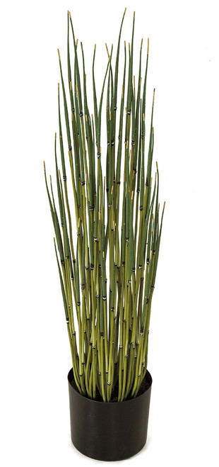 "A-185500 31"" Potted Equisetum Plant"