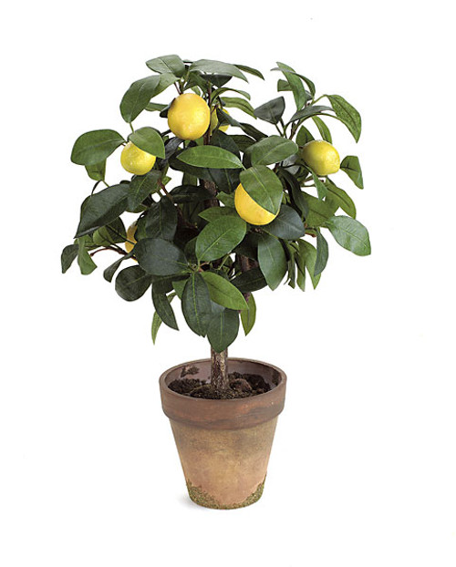 """P-0100 18"""" Potted Lemon Topiary"""
