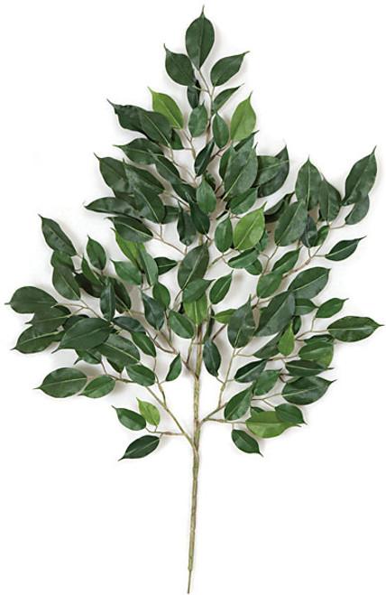 "24"" Ficus Branch Nitida"