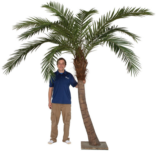 9.5' Phoenix Palm Tree with Steel Base Plate