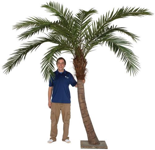 9.5' Phoenix Palm Tree with Steel Base Plate