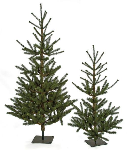 3.5' and 5' Dawson Fir Trees