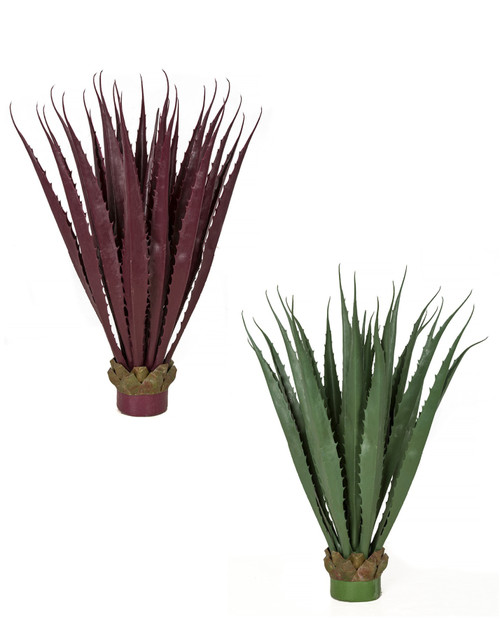 Outdoor UV Agave Plants ron Burgundy or Green