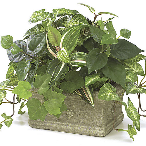 "P-3332 9"" Potted Syngonium, Wandering Jew & Pothos Plant"