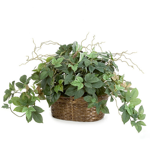 "P-80150 15"" Potted Maple Ivy & Philo Plant in Oval Basket"