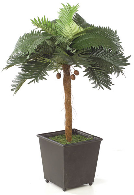 "25"" Palm Tree with Mini Coconuts"