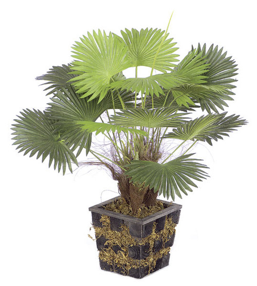 "P-0500 18"" Mini Fan Palm Black Pot"
