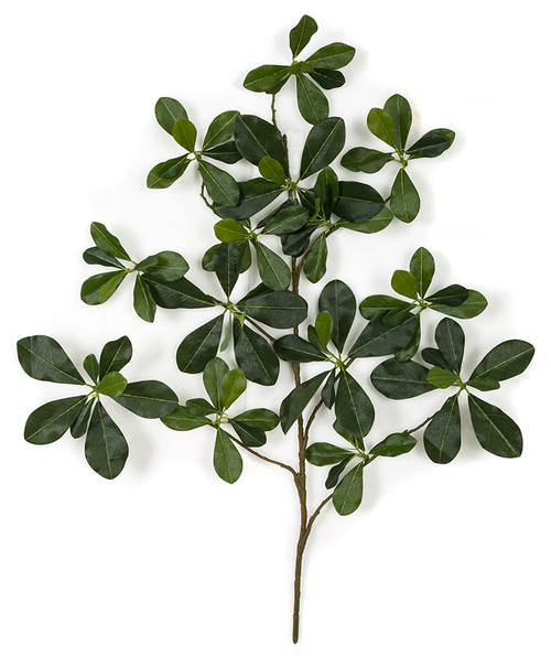 "26"" Black Olive Branch"