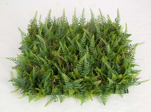 A-185575 - Regular Fern Mat