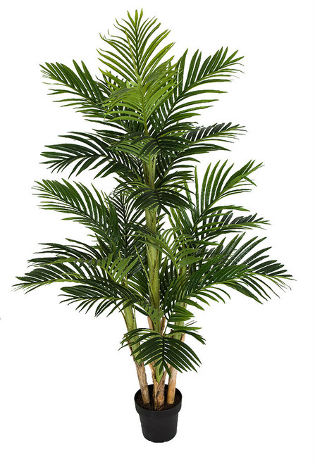 5.5' Parlour Palm Tree in Non-decorative weighted base