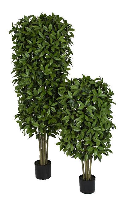 4' or 6' Bay Laurel Topiary Trees