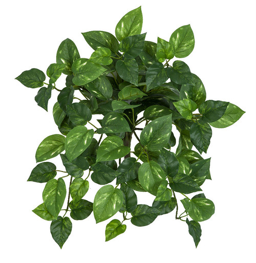 "14"" Variegated  Pothos Bush"