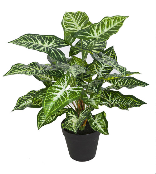 """16"""" Nepthytis Plant"""