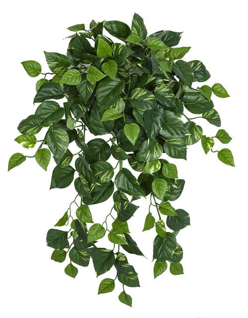 "36"" Pothos Bush Variegated Green/Cream"