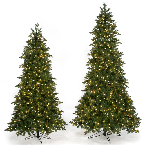 St. Lucia Fir Trees in 7.5' or 9' Heights