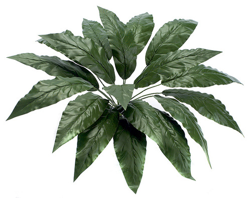 "PR-14124"" Spathiphyllum Plant"