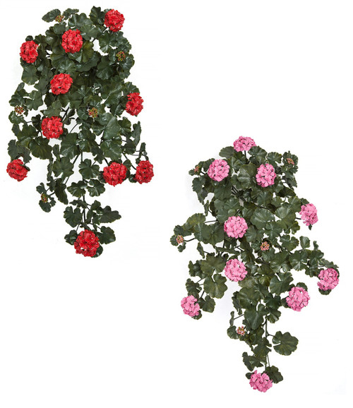 "35"" Hanging Geranium Bushes Red or Pink"
