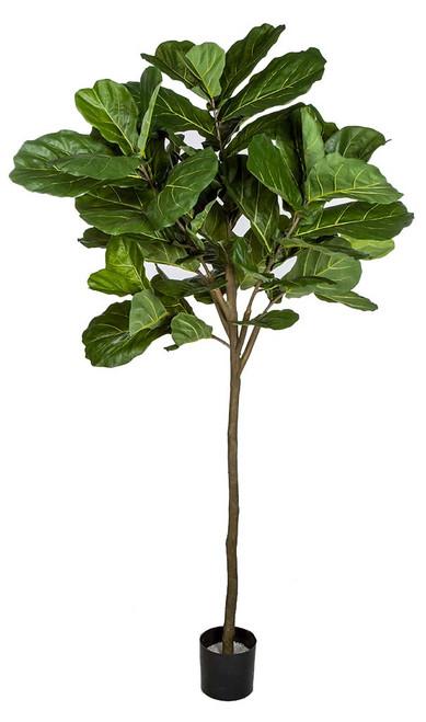 7 Foot Fiddle Leaf Fig Tree Single Trunk
