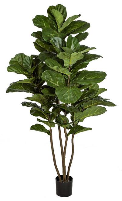 6.5' Fiddle Leaf Fig Tree