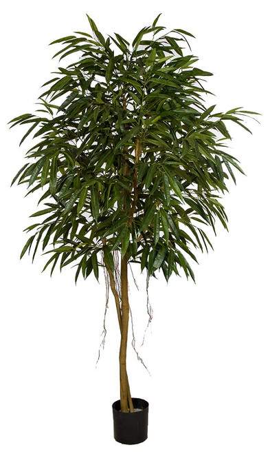 7' Royal Longifolia Tree