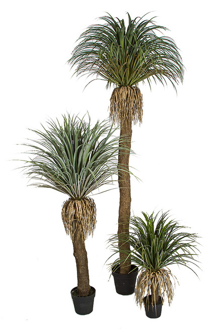 "Pandanifolia Grass Trees 31"", 54"", or 90"" Tall"