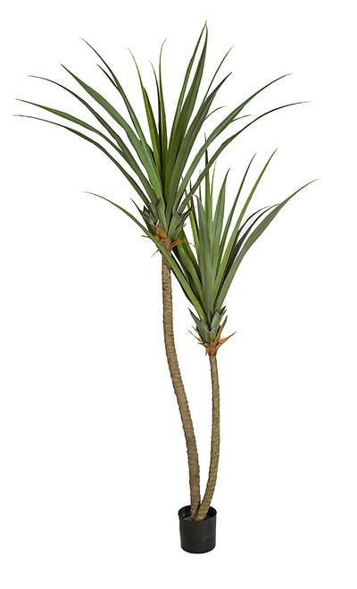 8' Pandanus Plant