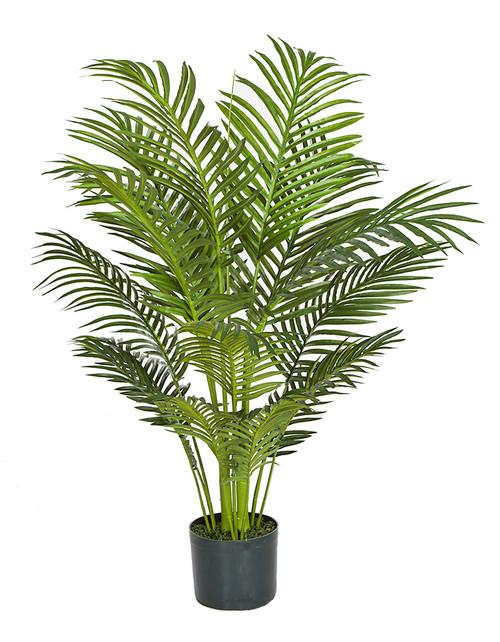 3.5' Areca Palm Tree