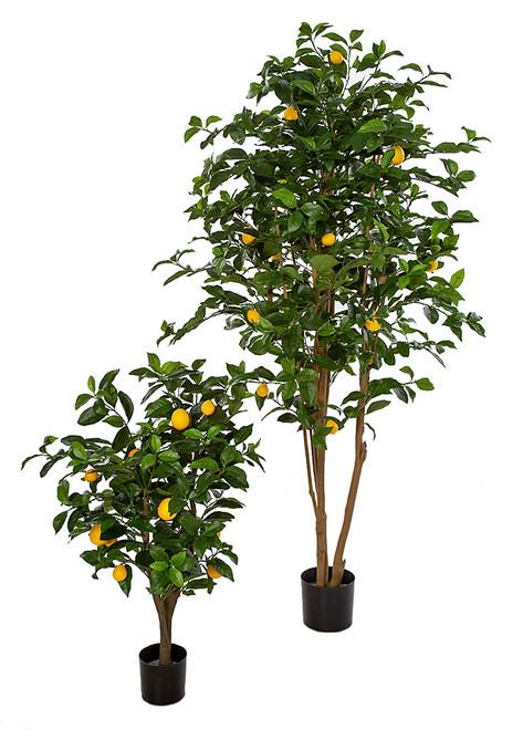 3' or 6' Lemon Tree on Natural Wood