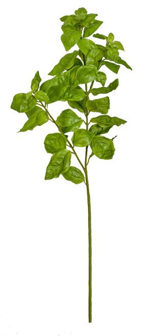 "24"" Basil Leaf  Spray"
