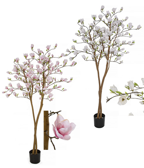 "79"" Magnolia Trees - Pink or White"