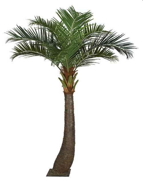 11.5 Coconut Palm Tree