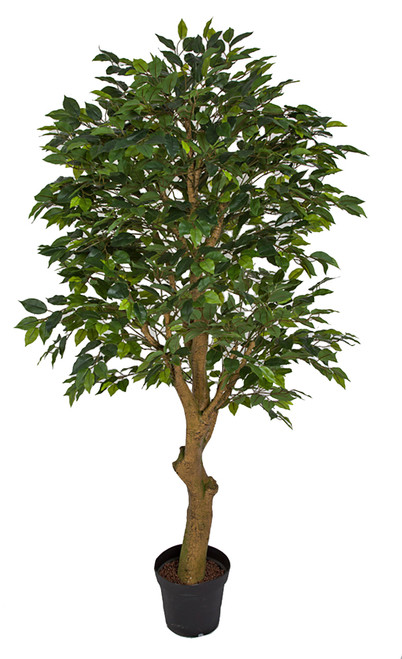 6' Ficus Tree with Synthetic Trunk