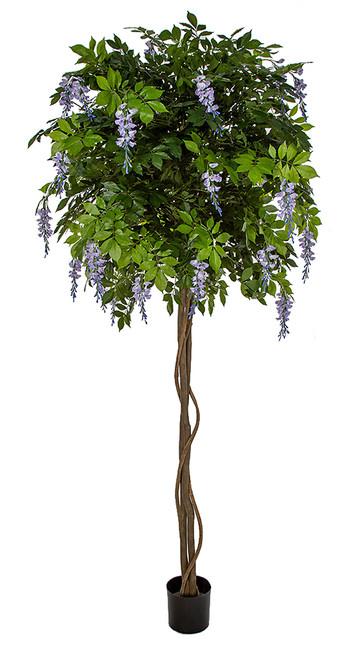 8' Flowering Wisteria Ball Tree