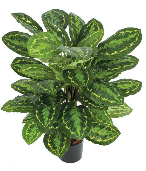 "36"" Calathea Roseopicta Plant FireSafe Foliage"