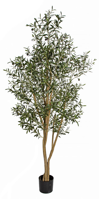 7.5' Olive Tree with Olives Natural Trunk