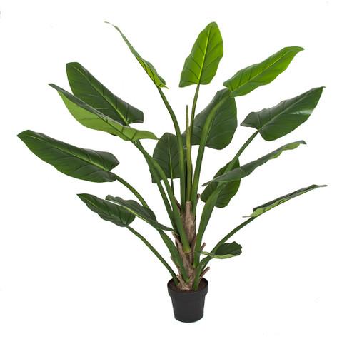 5' Philo Plant