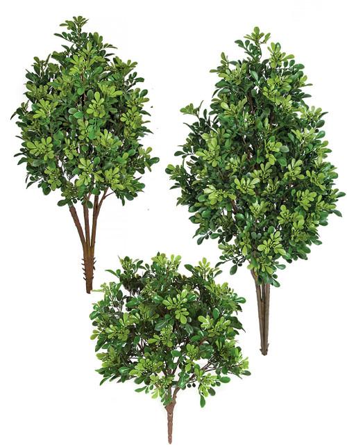 Polyblend Boxwood Bushes