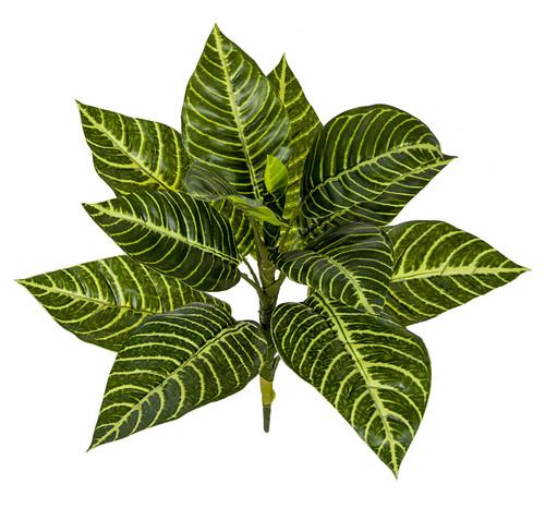"17"" Zebra Plant"