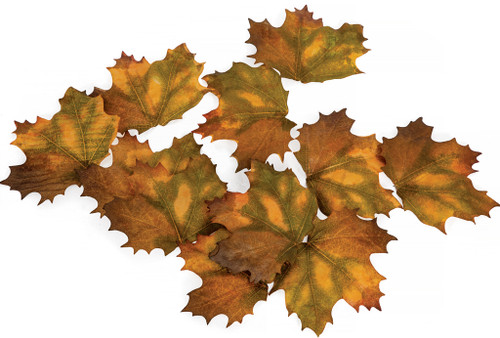 Mixed Yellow/Brown Fall Leaves
