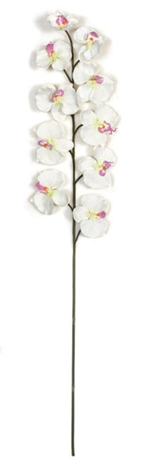 P-110330 - White Orchid