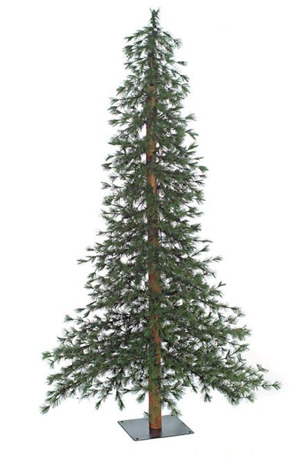 C-8466' Taos Mountain Pine