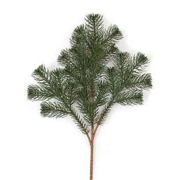 Thin tree with thin leaves that split like christmas tree leaves