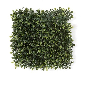 Boxwood Outdoor Shrubbery